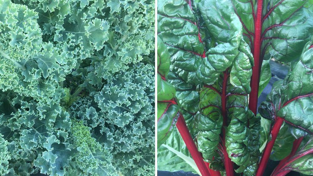 Lots of fresh green vegetables!