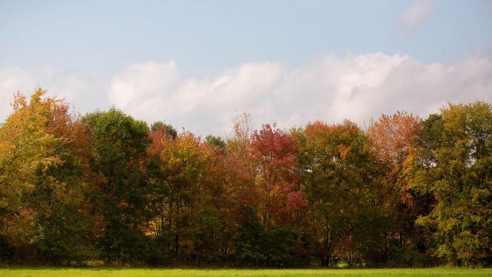 Beautiful Fall Landscape! Photo by: Michelle Girard