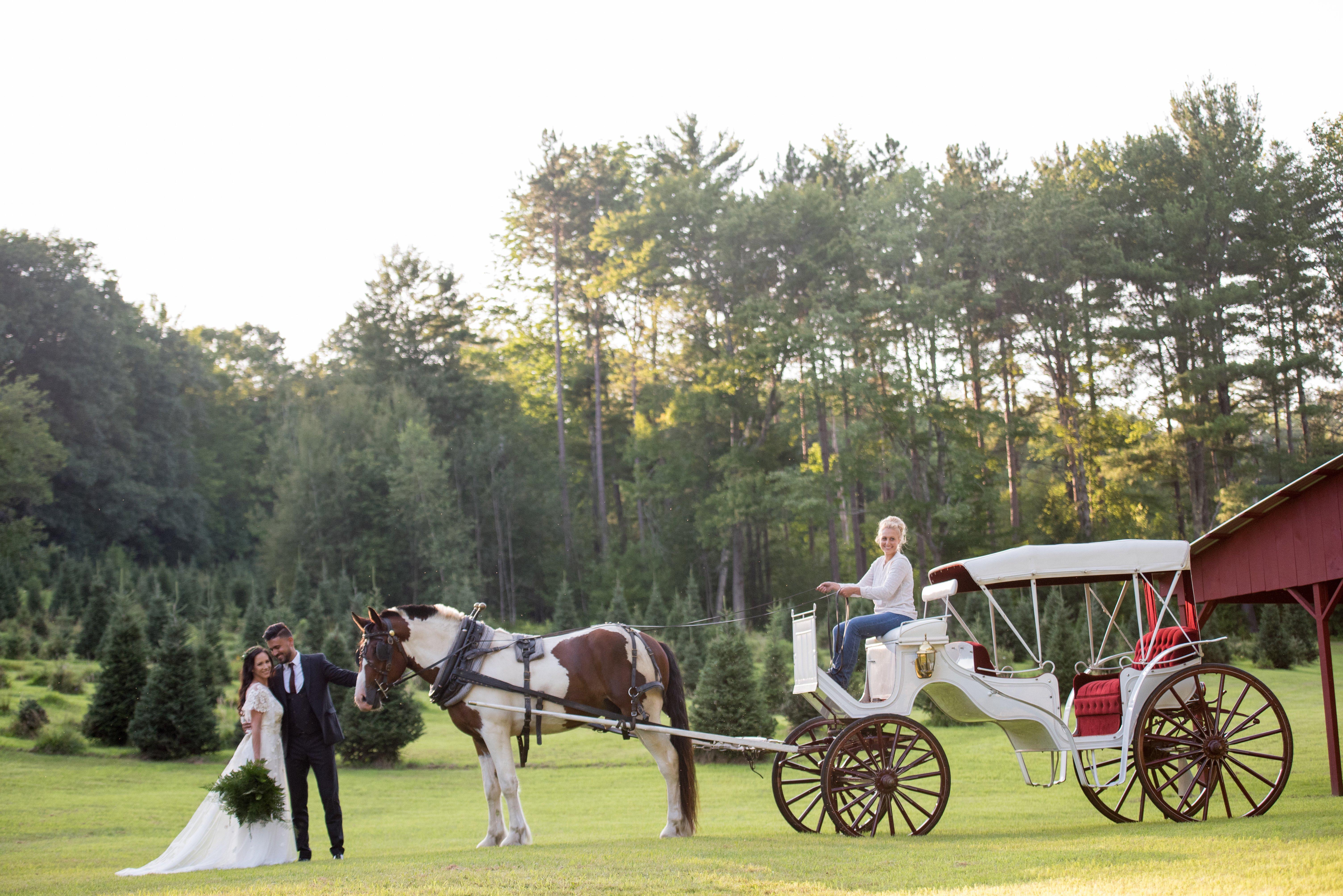 Tuckaway Tree Farm Carriage